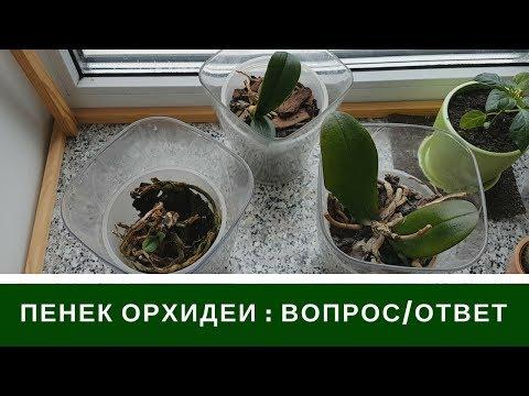 Пенек Орхидеи Что Будет