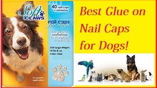 Best Glue on Dog Nail Caps