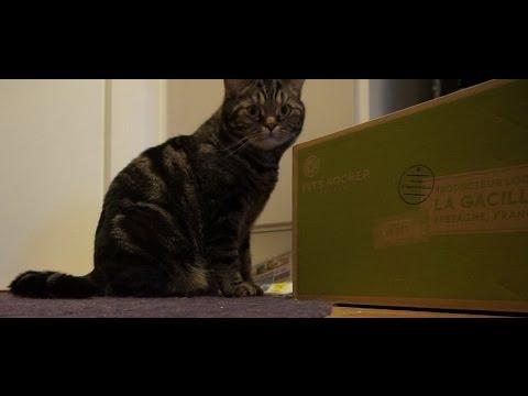 Кот и коробка)