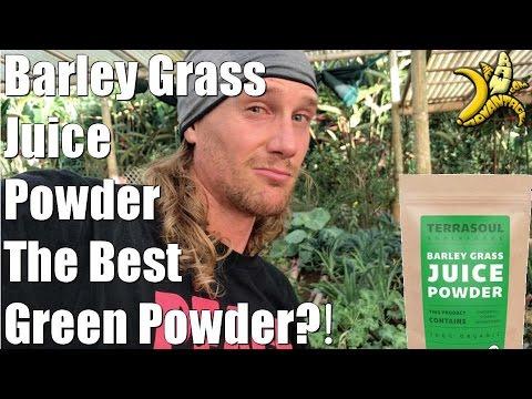 Barley Grass Juice Powder | The Best Green Powder?!