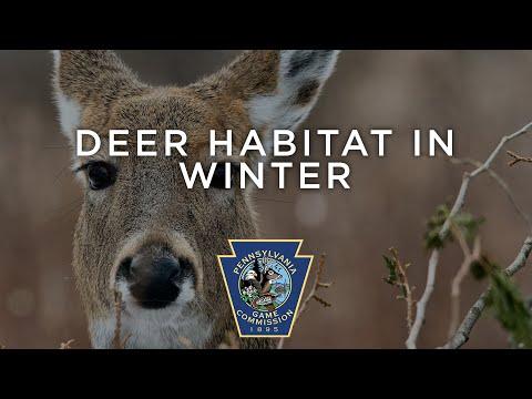 Deer Habitat In Winter