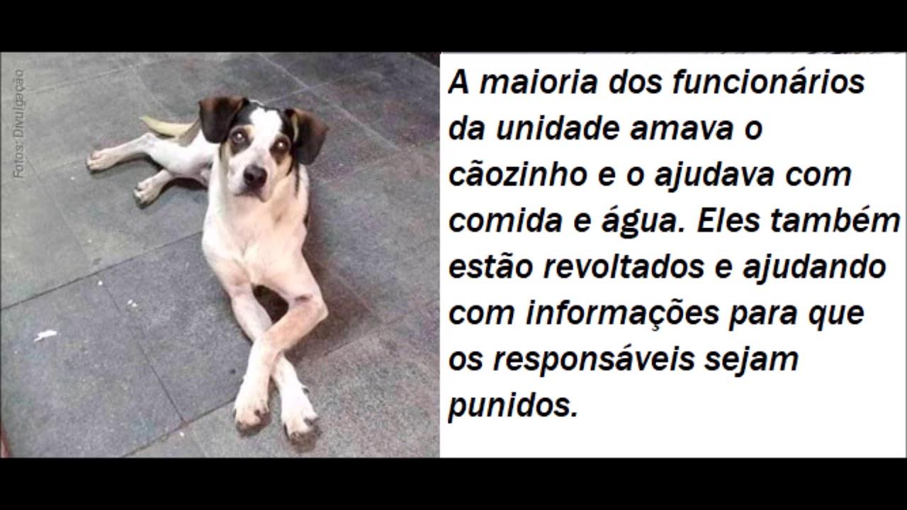 Morte De Cachorro Em Loja Do Carrefour Gera Onda De