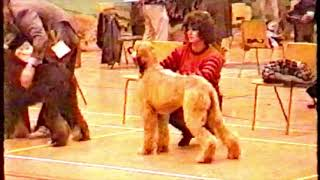 Yorkshire Afghan Hound Society Open Show 1990