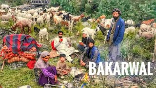 A day with BAKARWALS in Kashmir | In to the mountains of kashmir |