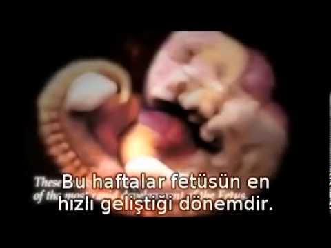 Tanrıyı Gördünüz mü? Embriyo Oluşumu ve Tanrı
