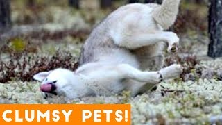 Funniest Clumsy Pet Fails Ever 2018 | Funny Pet Videos