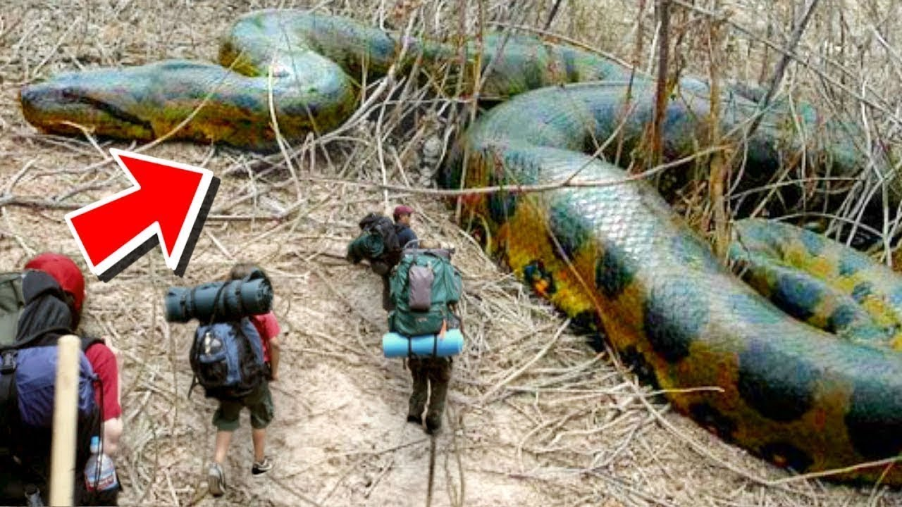 Download 10 Biggest Snakes Ever Found