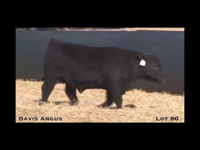 Davis Angus Lot 80