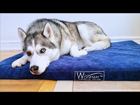 waterproof-dog-bed?-woofmat-dog-bed-review
