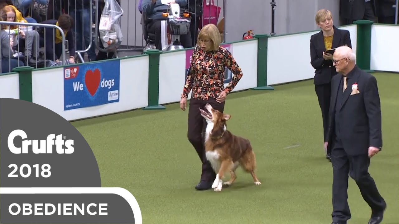 Obedience - Dog Championship - Part 16   Crufts 2018