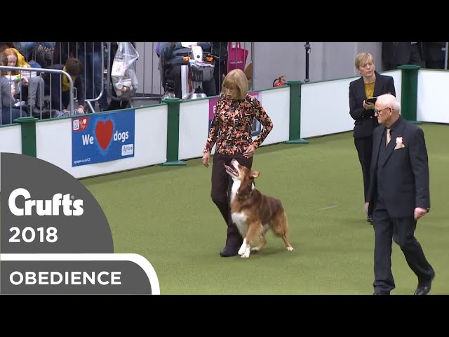 Obedience - Dog Championship - Part 16 | Crufts 2018