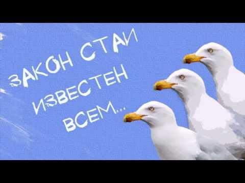 Картинки по запросу чайка джонатан