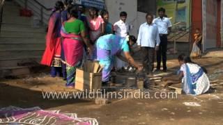 Celebration of Pongal festival in Madurai, Tamil Nadu