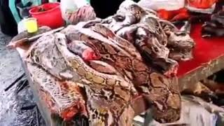 سوق اكل الحيوانات في الصين