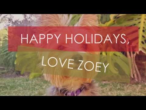 Happy Holidays, Love Zoey | Paws and Claws World