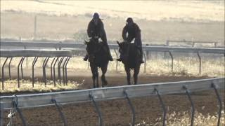 Love Conquers All X Social Register Colt In Pre-training At Bahram Training Complex 21 April 2015