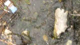 a kind of dirty creek a documenrary of suburban blight