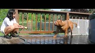 Dogue De Bordeaux Slow Mo Rinse Off!