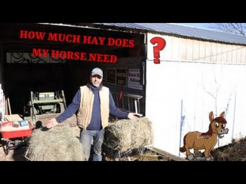 HOW MUCH HAY SHOULD I FEED MY HORSE ( 2020 )  #Hay #Feed #horses