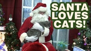 Taking my cat to see Santa!
