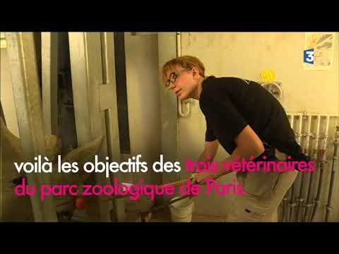 Série sur les animaux du Parc Zoologique de Paris : le rhinocéros blanc, une espèce protégée