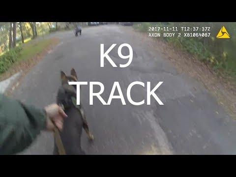 Police K9 Tracks Grand Theft Auto Suspect