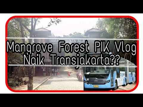 Mangrove Forest PIK Vlog,Naik Transjakarta?