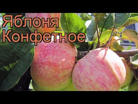 Яблоня обыкновенная Конфетное (malus konfetnoe) 🌿 обзор: как сажать, саженцы яблони Конфетное