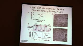 Doug Bishop: Rad51 is a Dmc1 Accessory Factor