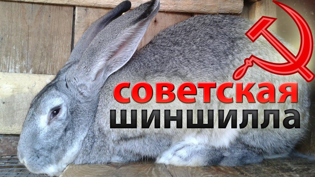 Объявления о продаже для тех, кто хочет купить кроликов, нутрий, шиншилл и других пушных животных для разведения в воронеже и области.