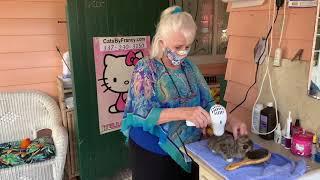 Cats By Francy kitten grooming & bath part 2