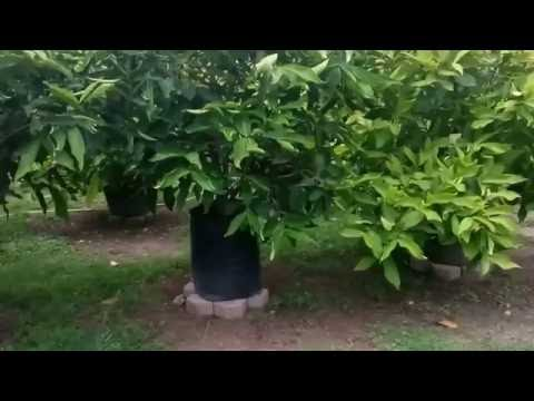Rose Apple Garden at Home - Plant Collection