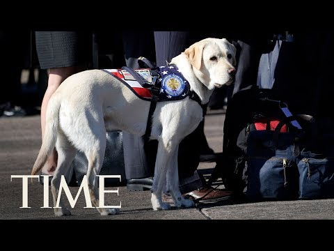 George H.W. Bush's Loyal Service Dog Sully Is Escorting His Casket To Washington | TIME