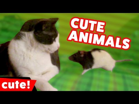 Funniest Cute Pet & Animal Videos & Bloopers Weekly Compilation 2016 | Kyoot Animals