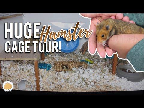 huge-natural-hamster-cage-tour!- -diy-hamster-cage-(german)