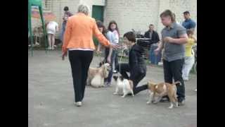 Ребенок и собака в Орле 4 мая