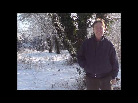 Let it Snow by David Keith Jones