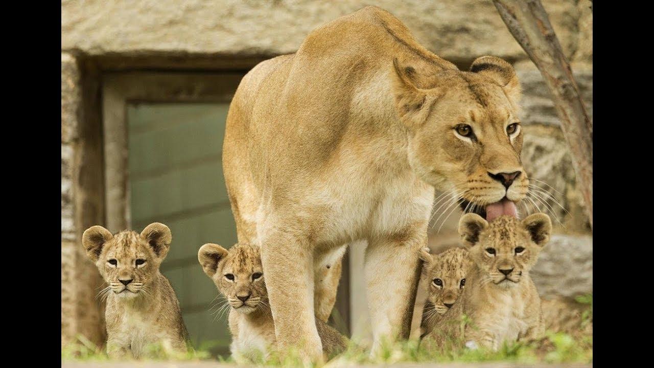 Животные с детенышами.