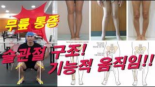 무릎통증,고관절통증,발목통증,외반슬체형(엑스자다리),내…