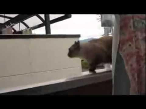 I gatti si buttano dal balcone
