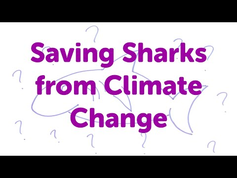 Minute Lectures: Saving Sharks from Climate Change.