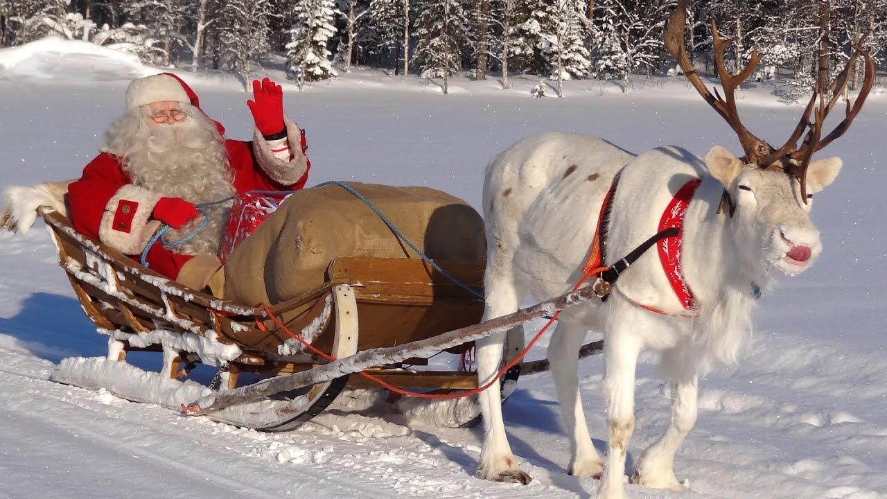 Immagini Babbo Natale Con Renne.Babbo Natale Super Licheni Di Renne Di Santa Claus In Lapponia Finlandia Rovaniemi Per I Bambini