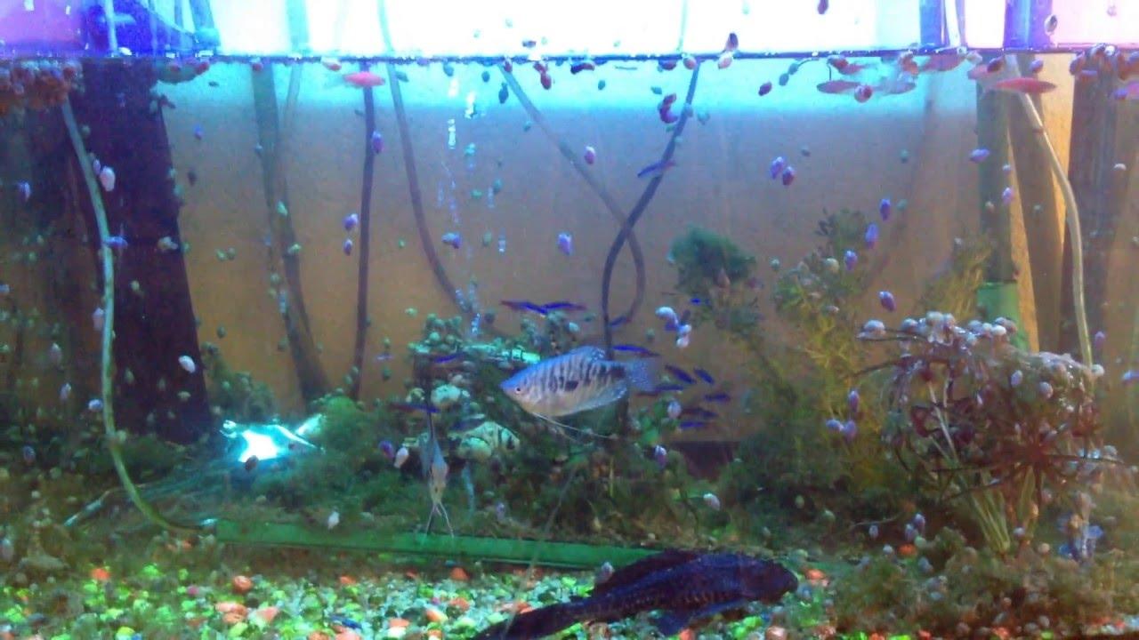 Как сажать водоросли в аквариум с фото несколько