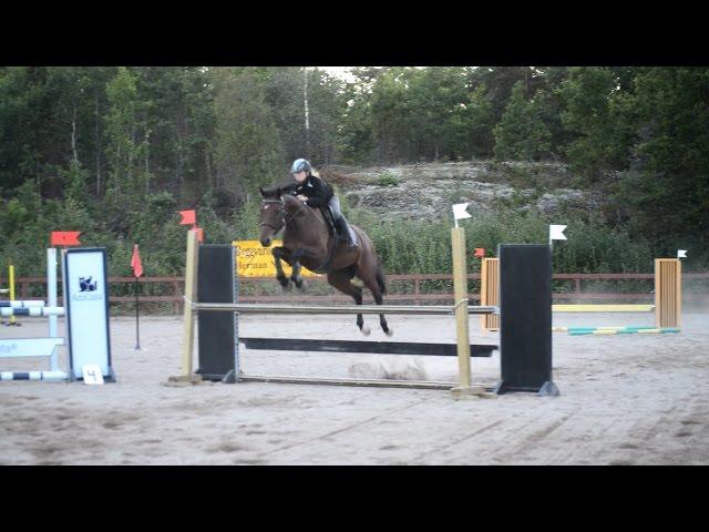 Bildresultat för vinna.blogg.se latoya min nya häst