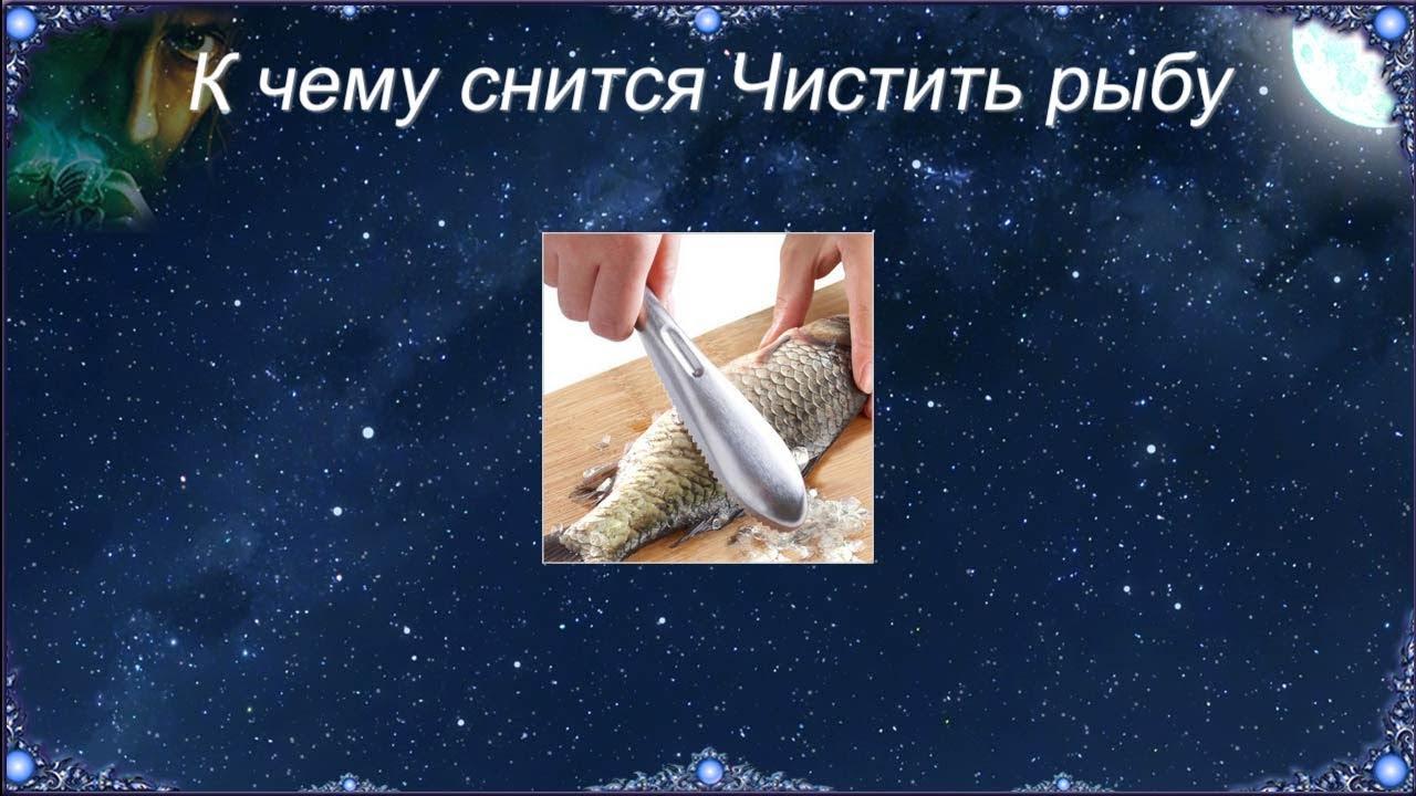 К чему снится Чистить рыбу (Сонник)