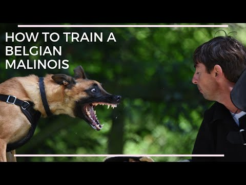 IPO privat dog training with Viorel Scinteie !!!