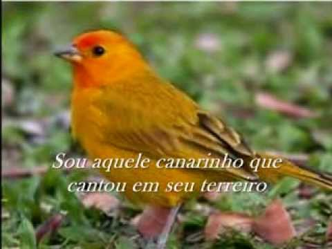 Chico Rey & Paraná - Canarinho Prisioneiro - Gero_Zum...