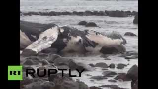 Chile: Beached WHALE baffles officials