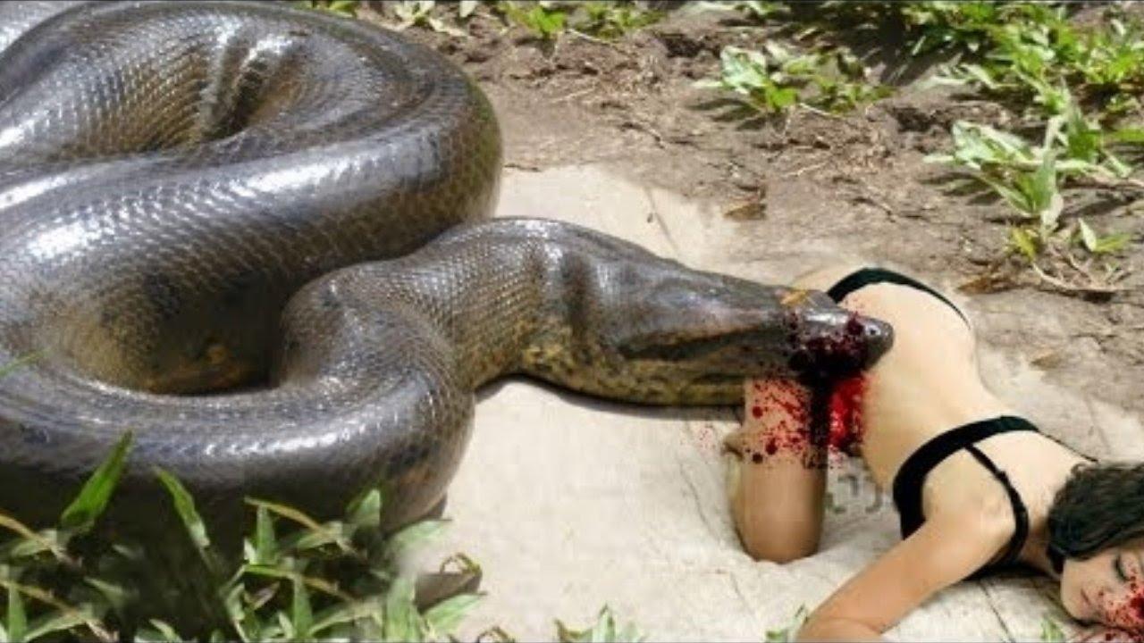 worlds biggest python snake found on earth wild boar