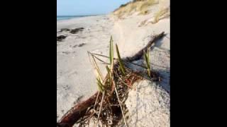 Insel Hiddensee ist Deutsche Karibik